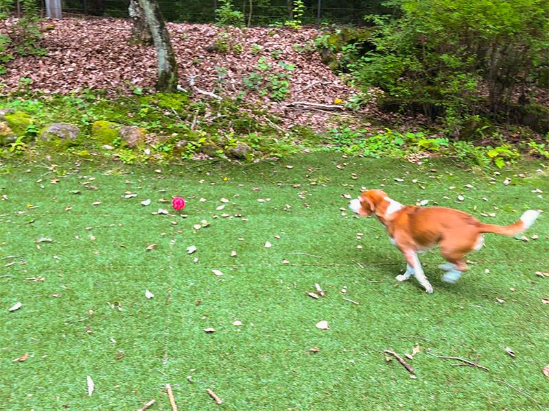 北軽井沢の本格ログハウス、ヴィラペンチュ。ペット、犬、大型犬、大歓迎。薪ストーブが自慢。リモートオフィス、ワーケーションにも最適。広いドックラン